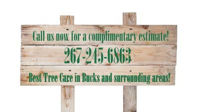 Tree Landscaping Service Bucks PA