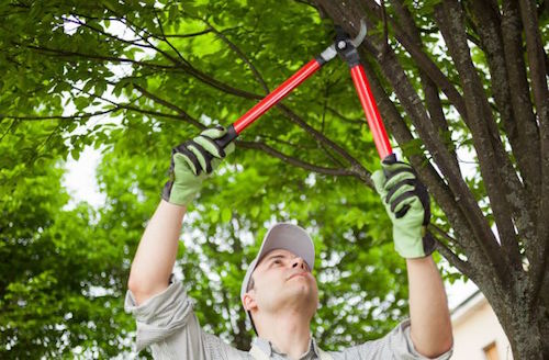 Tree Landscaping Service for Trees, Bushes, and Shrub Care Bucks PA