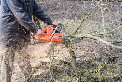 Tree trimming and removal of down branches and trees services in Bucks PA