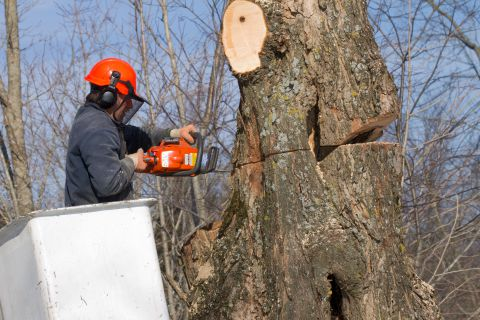 Tree removal services in Bucks PA